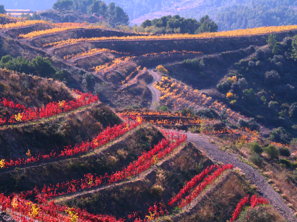 The terroir of Priorat