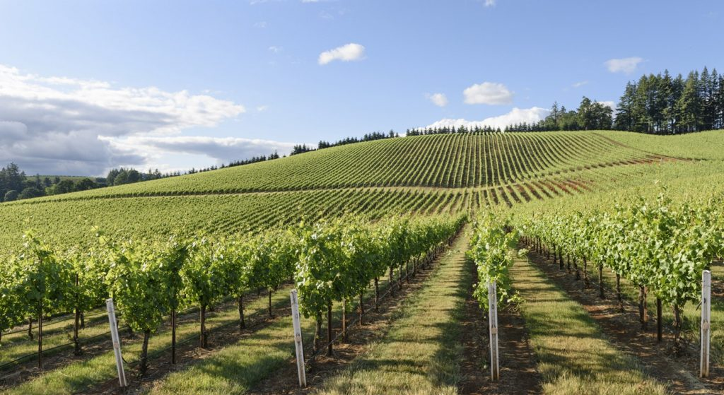 This image has an empty alt attribute; its file name is Pinot-Noir-in-the-Willamette-Valley-1-1024x559.jpg