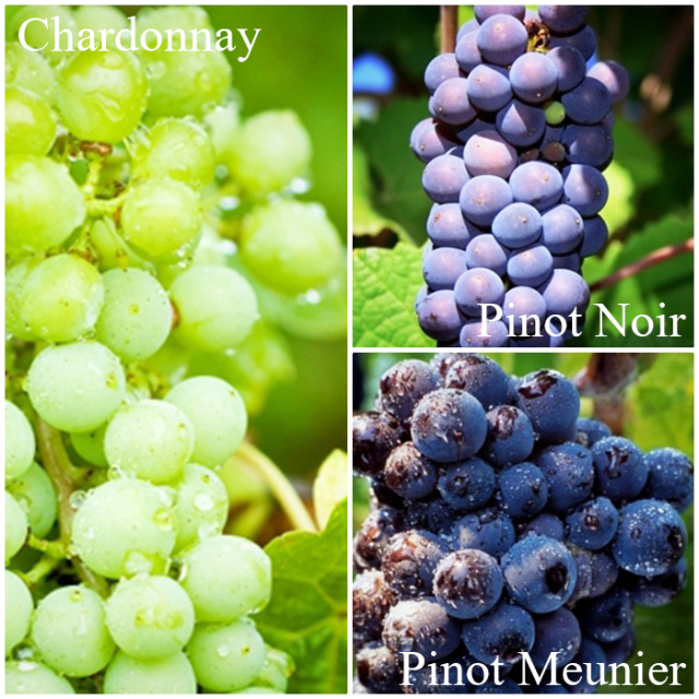 A square image sectioned to depict the proportion of grape varietals in Champagne Collet Brut Origin. 30% Chardonnay, 50% Pinot Meunier, 20% Pinot Noir.