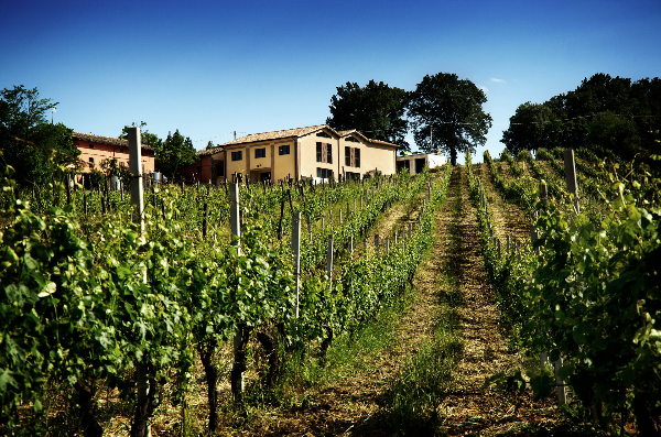 The lush green ColleStefano vineyards with the main estate and winery in the distance to the upper left of the photo.