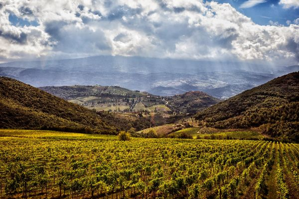 A gorgeous scene of the rolling hills and mountains behind the La Magia vineyards. White fluffy clouds float in a bright blue sky.