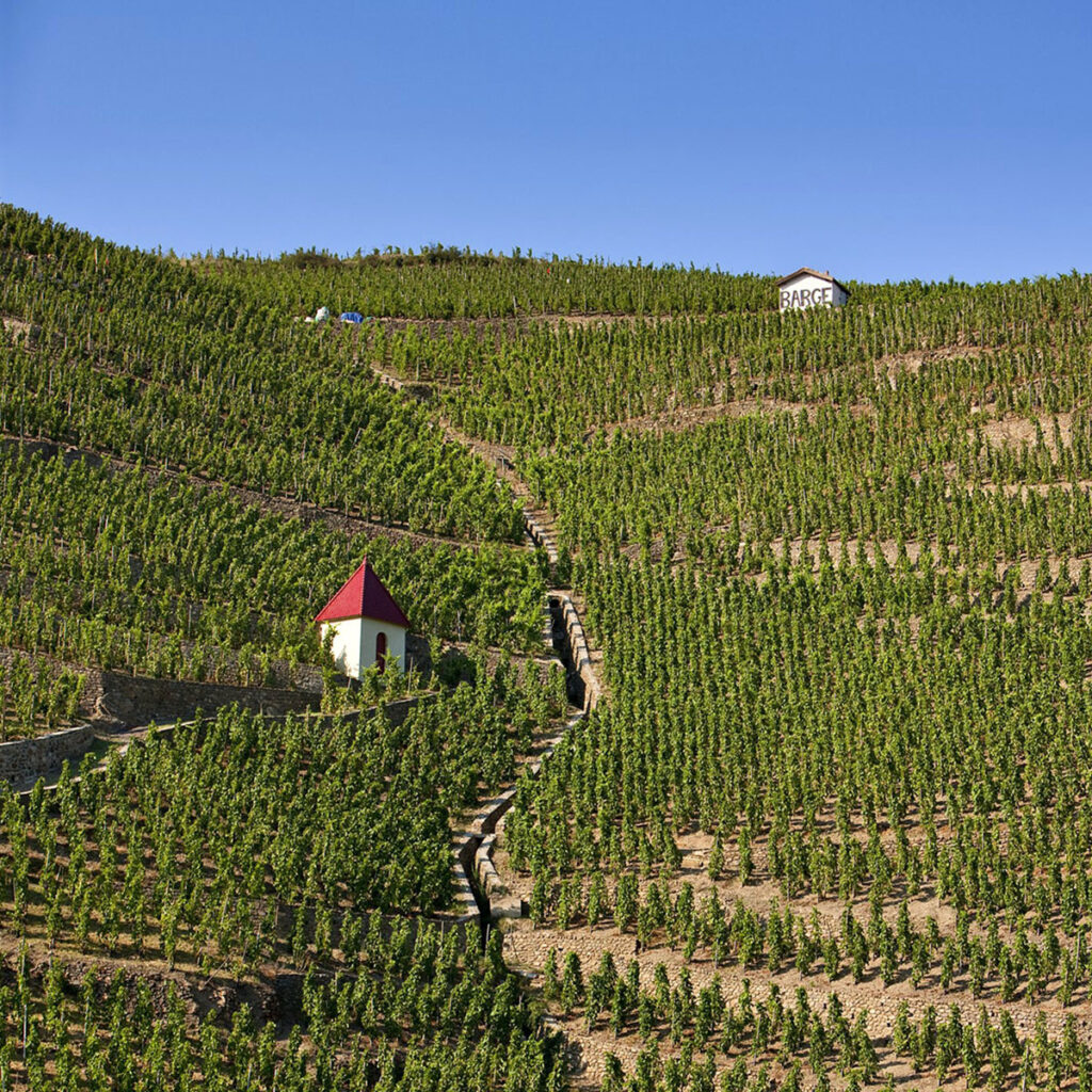 A view of the mountainous Gilles Barge vineyards, with grape vines planted in rows up the mountain. An irrigation tunnel runs down the centre, and 2 small shade huts lie amongst the vines - one near the top, the other toward the middle of the hill.
